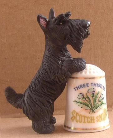 Scottish Terrier and thimble